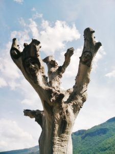 Carved Tree in Flam